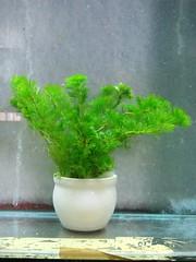 Thủy Sinh Tuấn Anh-Chuyên cây & Rêu Thủy Sinh, Cá Cảnh Biền & Hồ Cá Cảnh Biển - 25