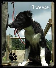 19 weken oud !