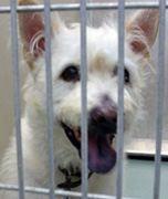 Kinship Circle - 2008-06-13 - Katrina-NOLA Rescuer Dead 02