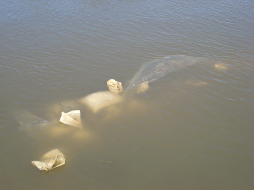 Submerged Sandbags