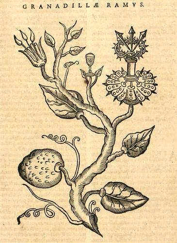 Granadillae Ramus - Nieremberg (SICD) 1635