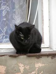 Uliczny obserwator (magro_kr) Tags: street black window cat poland polska krakow krakw cracow kot cracovia cracovi