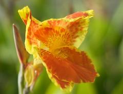 Flower (Michael De Leon) Tags: flower delete10 delete9 delete5 50mm delete2 bokeh delete6 delete7 delete8 delete3 delete delete4 save 1mill nikond40