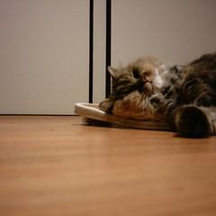 【写真】ミニデジで撮影したスリッパを枕にして寝る猫