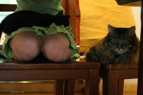 below: knees, cats