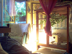 Bird Cages In My Bedroom (lucidcats) Tags: light plant green birdcage home window lamp leaves yellow vancouver washington leaf chair state fabric utata wa modified