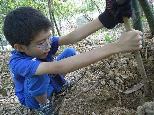 你拍攝的 38佑佑挖竹筍。