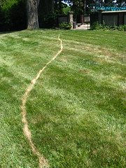 A Line in the Grass (nohobot) Tags: plants green grass virginia lawn richmond va richmondva richmondvirginia rva agecroft agecrofthall