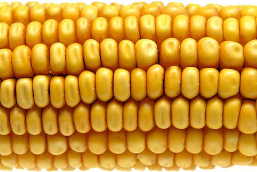 Primer plano de una mazorca de maíz