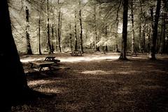 Molla beech forest (Daniel Goude) Tags: light wallpaper forest dream reserve tranquility grand mysterious beech molla herrljunga