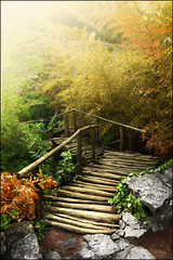 Feels like Fall (ilina s) Tags: bridge autumn light fall nature photoshop daylight woods rocks colorful day path bulgaria balchik