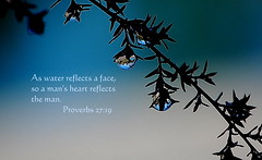 Man's Heart Reflects the Man (honey 77) Tags: blue reflection nature water beautiful face heart god jesus christian inspirational waterdrops limb scriptures proverbs bibleverse nikond40