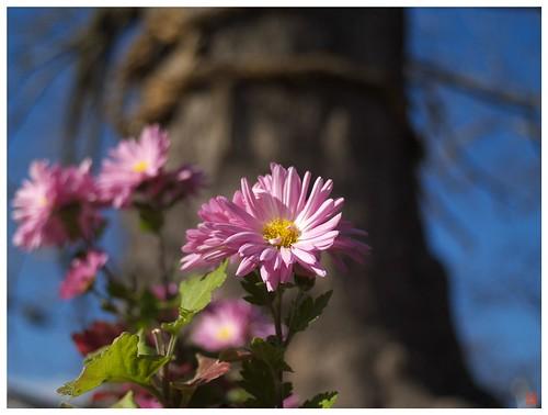 Flowers 081216 #04