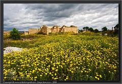 Antica masseria (SiciliaFotografica) Tags: old flowers flower ruins italia sicily fiori fiore sicilia siracusa rovine siracuse masseria