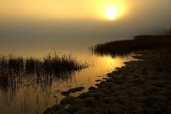 Through the haze (Inge Pettersen) Tags: ocean sea orange sun seascape seaweed color tree water silhouette norway fog sunrise landscape delete5 delete2 coast frozen haze weed warm frost delete6 delete7 smooth foggy straw save3 delete3 save7 save8 delete delete4 save save2 save4 shore sav