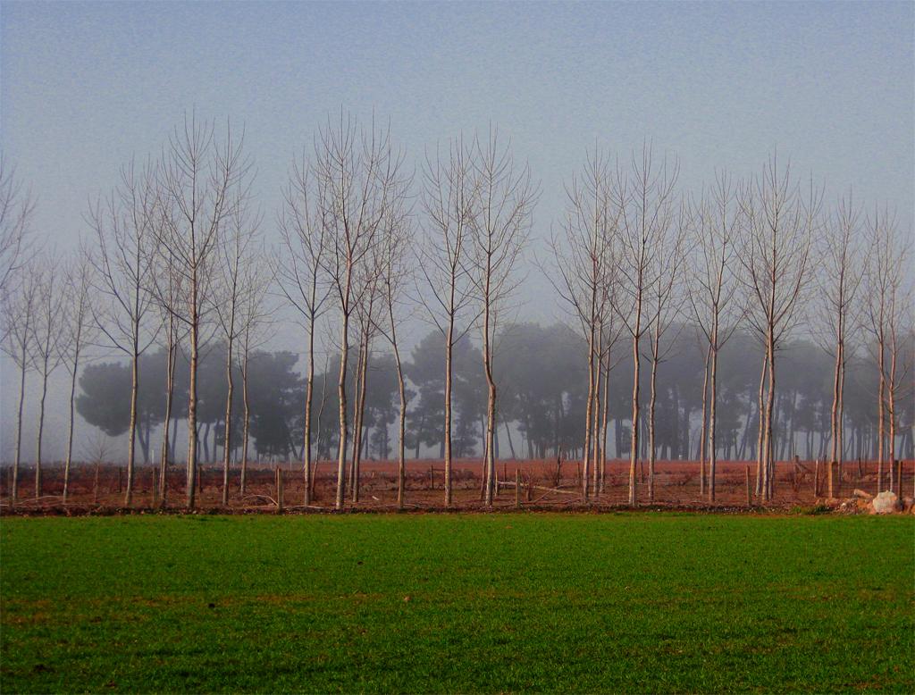 Árboles entre árboles