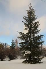 Tolkmicko,  Warmia, Poland (LeszekZadlo) Tags: trees wint