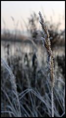 Väterchen Frost (stefanspy (38)) Tags: sea germany deutschland see frozen frost rostock hansestadt mecklenburgvorpommern naturesfinest hansestadtrostock photoshopcs3 canoneos450d tamronaf1750128