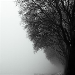 a thin fog ... (rita vita finzi) Tags: trees fog solitude branches silence ferrara nebbia myst lemura anawesomeshot thesecretlifeoftrees awalkintheafternoon impassionateabouttagstoo thatsreallyreassuringilltagyouwithoutpityd nojustoccasionallyandwithpassionnotpityplease darumaneedstobetaggedonhisnextpicturenoawardsonlytags yournewpassionfortagsremindsmeofthebeatlessonglovelyritatagmetermaid