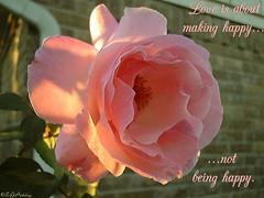 rose13 (vaishu87) Tags: kavithai