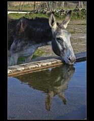Sed (Paulina58) Tags: canon spain agua sombra badajoz burro viajes vacaciones afalilucentum higueradevargas paulina58