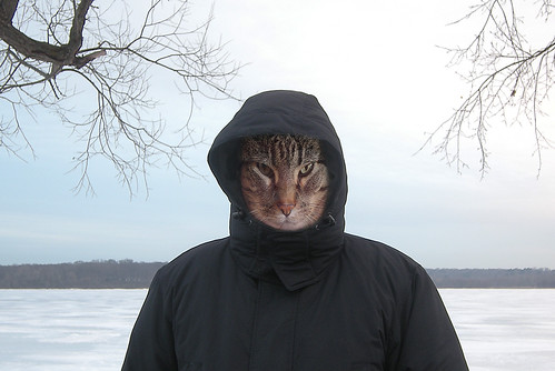 Winter Brings Out My Feline Side