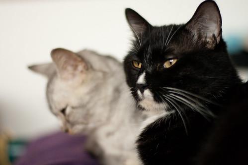 黑猫和灰灰 Heimao & Huihui