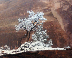 winter in red rock country (Outrageous Images) Tags: trees winter wild snow cold film ice colorado snowstorm roadtrip adventure wilderness 400mm canonelan blueribbonwinner mywinners abigfave amazingplaces outrageousimages davewadsworth  coloradonationalmonumemt coloradonationalmonumentwinter mysticenergy