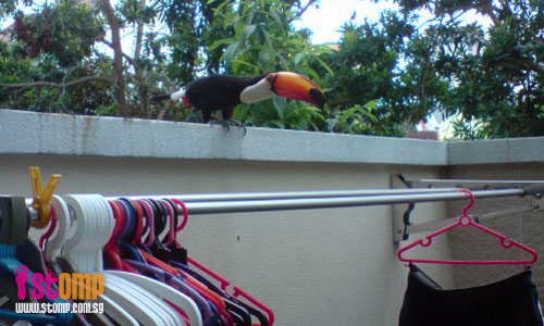 Exotic bird pays surprise visit to my house