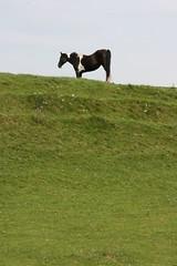 horse on dike (Eileen Blackmore) Tags: horse dike