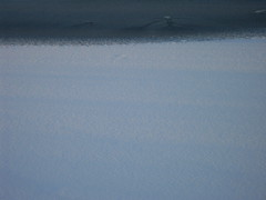 separation (N.P. Thompson) Tags: winter snow frozenlake