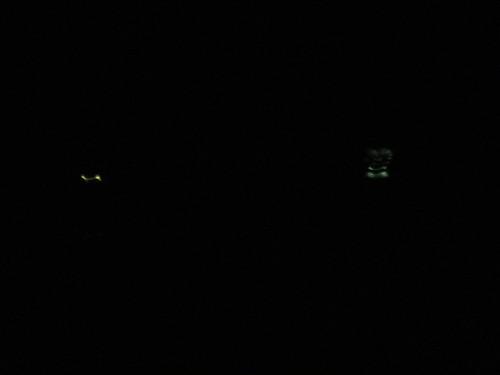 蛍 firefly