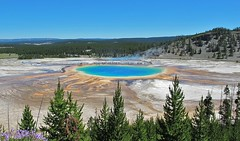 YNP ~ Grand Prismatic Spring V (karma (Karen)) Tags: trees topf25 explore pines wildflowers brightcolors wyoming penstemon hotsprings grandprismaticspring yellowstonenp midwaygeyserbasin 70favs usparks