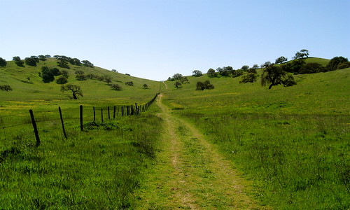 Green Trail Through Green Hills