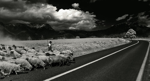 No Car in Sight (Luis Montemayor) road tree blancoynegro clouds mexico arbol kid sheep camino carretera path nubes nio myfavs ovejas iztaccihuatl blackandwhtie abigfave