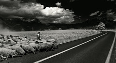 No Car in Sight (Luis Montemayor) Tags: road tree blancoynegro clouds mexico arbol kid sheep camino carretera path nubes nio myfavs ovejas iztaccihuatl blackandwhtie abigfave