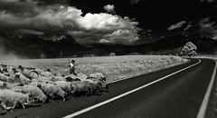 No Car in Sight (Luis Montemayor) Tags: road tree blancoynegro clouds mexico arbol kid sheep camino carretera path nubes nio myfavs ovejas iztaccihuatl blackandwhtie abigfave