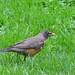 Robin at Benjamin Banneker Park