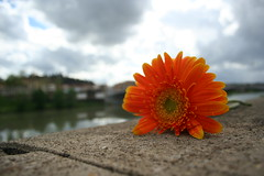 On a rainy day (Bassi) Tags: bridge vacation italy flower river florence day rainy firenze arno bassi