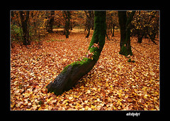 ( Ali Shokri / www.alishokri.com) Tags: travel autumn tree fall nature colors beautiful canon landscape photography bravo perfect shot searchthebest iran photos shots quality contest loveit just chapeau pixels 2008 photoart soe 07 natures naturesfinest goldenglobe blueribbonwinner firstquality littlestories supershot 5photosaday outstandingshots flickrsbest spselection utatafeature abigfave shieldofexcellence platinumphoto anawesomeshot superaplus aplusphoto ultimateshot holidaysvacanzeurlaub superbmasterpiece infinestyle treesubject diamondclassphotographer flickrdiamond megashot allin1 bratanesque ysplix amazingamateur excellentphotographerawards superlativas theunforgettablepictures onlythebestare eliteimages fiveflickrfavs firththeearth excapture flickrslegend betterthangood theperfectphotographer goldstaraward ostrellina picswithsoul showmeyourqualitypixels alemdagqualityonlyclub alishokri 1on1photooftheweekapril2008