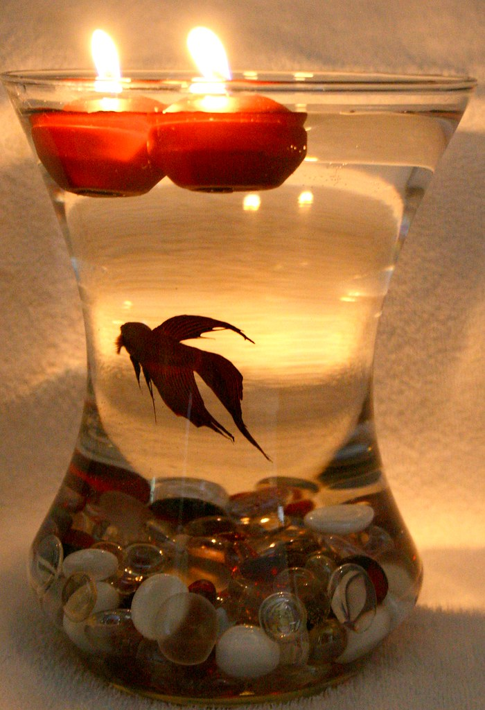 Beta Fish Bowl Wedding Reception Centerpiece