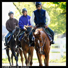 Visitors from Japan (Rock and Racehorses) Tags: horses ny japan race belmont thoroughbreds ragstoriches belmontstakes betterthanhonour casinodrive champagnesquall sparkcandle