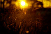 Dourado (flaviochan) Tags: sunset golden dourado pôrdosol buenodeandrada aficionados aficinonados