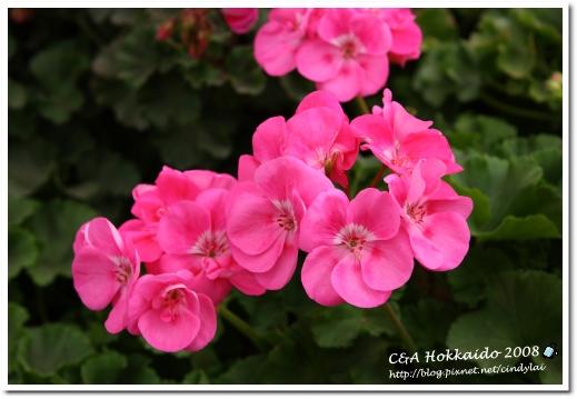 Hokkaido_0493