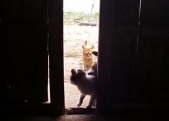 さすけと野良猫