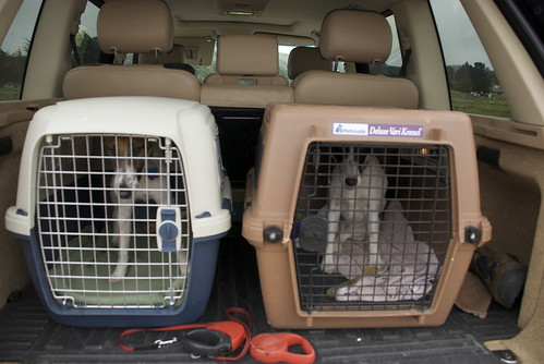 Our dogs travel in a canine paddywagon. Even for a short trip to Sonoma.