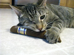 Maggie claims her catnip cigar