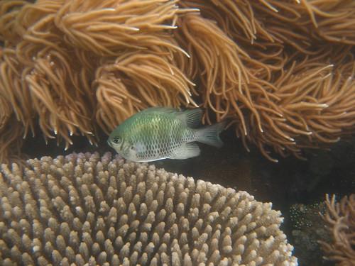 fish 2 Low Islet