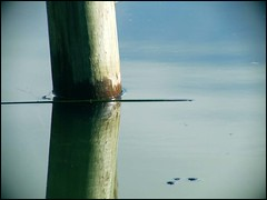 Waterline (Harvey Schiller - chateauglenunga) Tags: blue green water post pole telephoto wetlands barker laratinga moutn