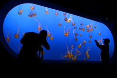 We are everywhere (anadelmann) Tags: california ca usa canon aquarium mba monterey jellies beautifullight photographers montereybayaquarium f100 visitors pictureperfect canonpowershot v1000 g9 seanettles outerbay weareeverywhere mywinners colorphotoaward excellentphotographer theunforgettablepictures canonpowershotg9 tup2 anadelmann nxpl